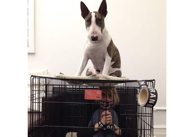 Pet Fashion Show Comes to NYFW: Top 10 Fashionable Pets on Instagram