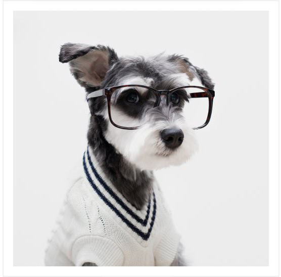 Mr. Porter Brings Dogs Back Into Fashion